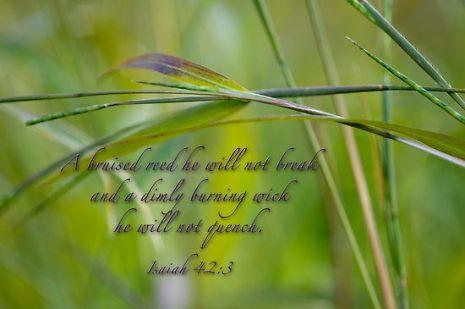bruised-reed-he-will-not-break