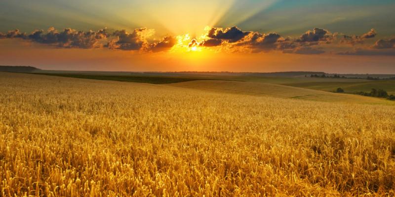 Harvest-Blog-Front